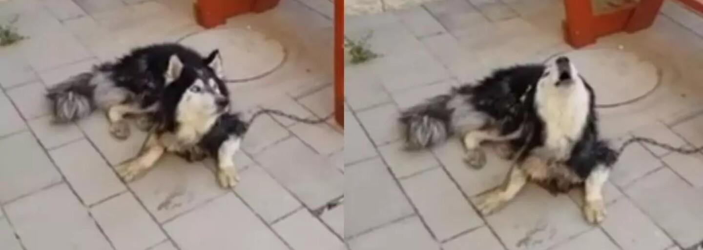 Strateného psa sa policajti snažili nájsť podľa jeho obľúbenej pesničky. Obišli celé mesto a podvyživené zviera nakoniec objavili