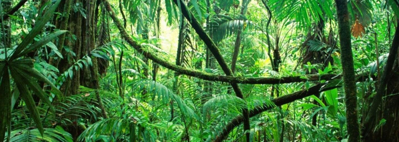 Ztraceného turistu po 9 dnech v Amazonském pralese zachránily opice. Ukázaly mu cestu k vodě, jídlu a nakonec ho dovedly zpět do civilizace