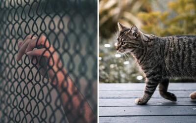 Strážníci na Srí Lance zadrželi kočku, která do vězení pašovala drogy. Podařilo se jí uprchnout