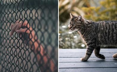 Strážnici na Srí Lanke vo väzení zadržali mačku, ktorá dnu pašovala drogy. Podarilo sa jej však utiecť