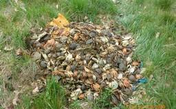 Strážníci v Praze našli 703 odhozených krabů, někteří ještě žili. Vyhodil je zřejmě majitel restaurace