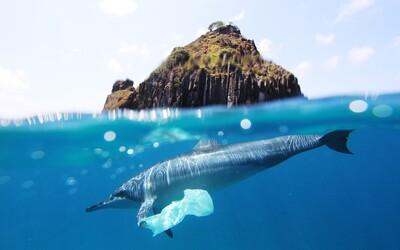 Studentka objevila bakterie požírající plast, zatímco 10 řek je zdrojem 90 % znečištění v mořích