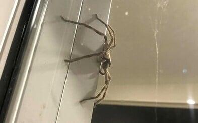 Studentka se bála pavouka, a tak si zavolala donáškovou službu, aby se ho zbavila