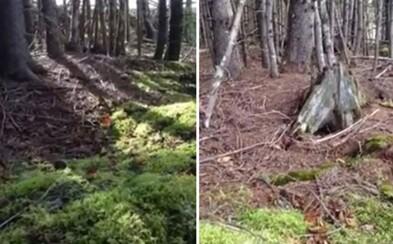 Sú lesy doslova pľúcami Zeme? Chlapíkovi z Kanady sa podarilo zachytiť pozoruhodné video