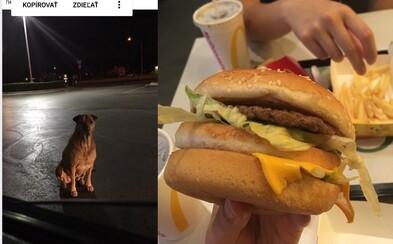 Fenka v noci utíká z domu před McDonald's a tváří se, že je bez domova, aby ji lidé krmili hamburgery