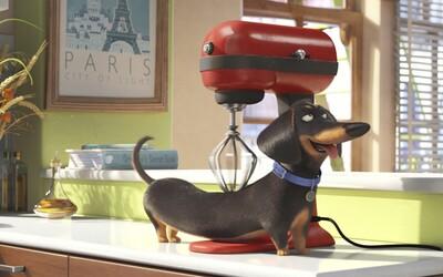 Tajný život zvierat ti prezradí, čo robia domáci miláčikovia, keď ich necháš doma samých