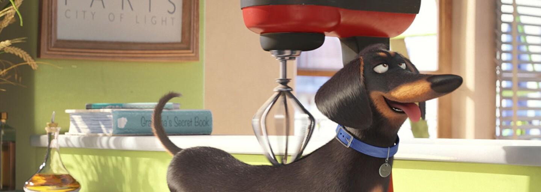 Tajný život zvieratiek nám vo vtipnom traileri prezradí, aké je to byť netradičným domácim miláčikom
