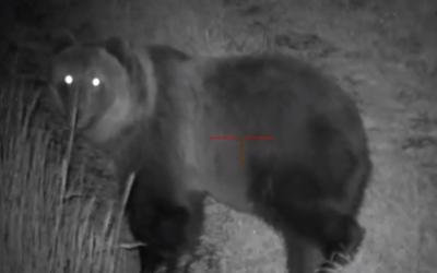 Takmer 40 medveďov na kukuričnom poli na Liptove: Poľovníci neverili vlastným očiam, takáto obrovská skupina je vraj raritou