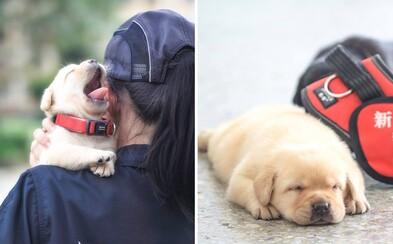 Takto vyzerajú nové policajné psy v Taiwane. Roztomilé šteniatka budú trénované na hľadanie drog, no vôbec nepôsobia nebezpečne
