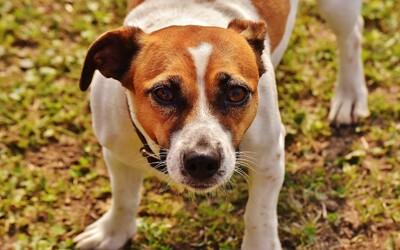 Talianska mafia ponúka 5 000 € za zabitie drogového psa. Ohrozuje jej zisky
