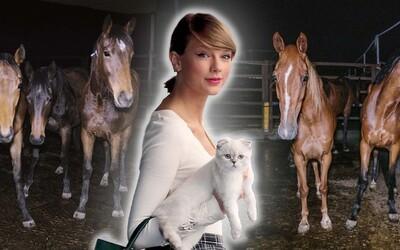 Taylor Swift zrušila vystoupení. Organizátoři koncertu údajně nechali zemřít 6 koní, tvrdí aktivisté