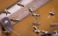 Tekuté zlato z Banskej Bystrice. Manželia vytočili lepší med ako je ten najdrahší na svete