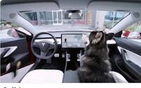 Tesla vytvorila nový mód pre psov, vďaka ktorému môžu oddychovať vo vychladenom aute, aj keď si majitelia odbehnú