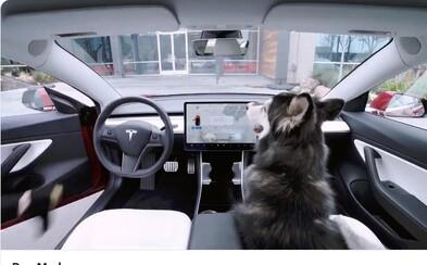 Tesla vyvinula nový mód pro psy, díky němuž mohou oddychovat v klimatizovaném autě, i když si majitelé odběhnou