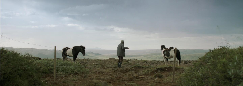 Tip na film: Úchylný pohled na podivně krásný život na Islandu, to je snímek O koních a lidech