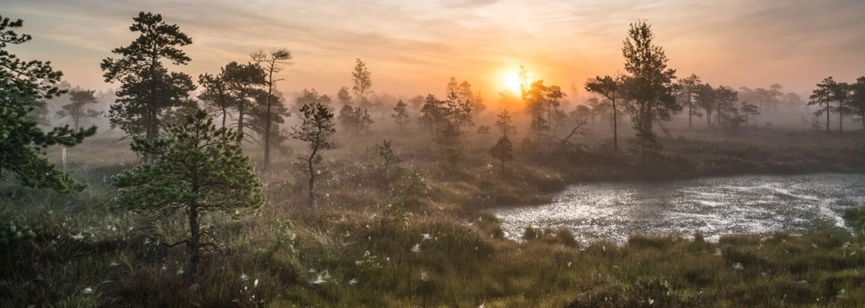 Tisícky rokov starý močiar v Lotyšsku je naozaj prekrásny. Jeho ranná scenéria očarí všetkých milovníkov prírody