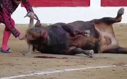 Toreador před očima diváků opakovaně bodal býka do hlavy. Proti krvavému sportu se už bouří ochranáři zvířat