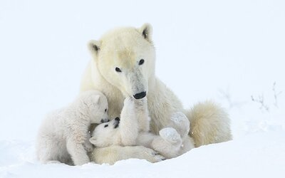 Toto jsou nejlepší fotky roku divokých zvířat. Ukazují, jak fascinující dokáže být příroda