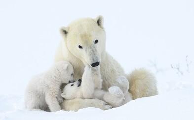 Toto sú najlepšie fotky roka divokých zvierat. Ukazujú, aká fascinujúca dokáže byť príroda