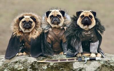 Traja mopslíci zahrajú Game of Thrones aj sami