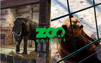 Trápia sa slony v bojnickej ZOO? Majestátne stvorenia sme navštívili v mínusových teplotách
