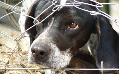 Tresty za týranie zvierat na Slovensku môžu byť prísnejšie. Návrh chce násilníkov posielať do väzenia namiesto pokutovania