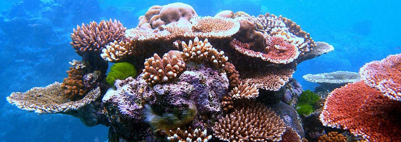 Třetina korálových útesů v Tichém oceánu je pokryta plastem. Do roku 2025 na nich bude zachyceno 15 miliard kousků plastového odpadu