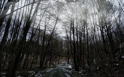 Tribeč: Najtajomnejší les na Slovensku, ktorý vzal už niekoľko ľudských životov bez vysvetlenia