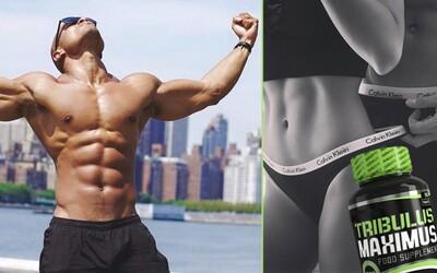 Tribulus a rôzne iné doplnky výživy na zvýšenie hladiny testosterónu v tele. Skutočne fungujú a dokážu aj zlepšiť svalové prírastky?