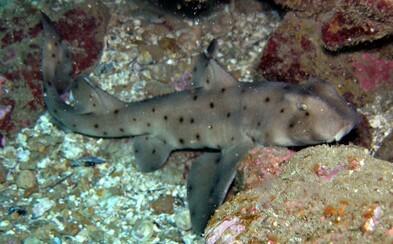 Trojica ukradla žraloka z akvária. Prepašovali ho von v kočíku po tom, čo ho jednoducho pred ľuďmi vytiahli z vody
