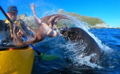 Tuleň nenápadně připlul ke kajakáři a dal mu facku chobotnicí