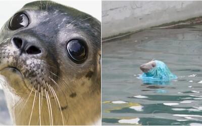 Tuleň sa zamotal do plastovej tašky. Takmer 15 minút bojoval o život
