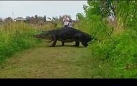 Turisti na Floride nechceli veriť vlastným očiam, keď sa pár metrov od nich prechádzal obrovský krokodíl. Pripomínal im prehistorického dinosaura