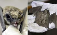 Turisti v Slovenskom krase omylom vyhubili celú kolóniu netopierov v hodnote 70 000 €