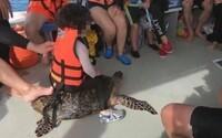 Turistka veselo jazdila na kriticky ohrozenej korytnačke v Malajzii. Znechutila tisícky ľudí, už ju začali vyšetrovať