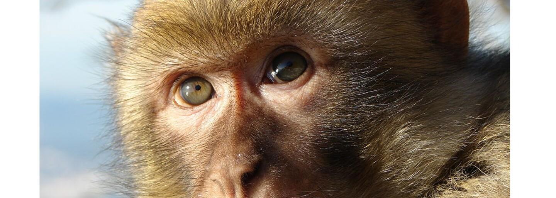 Týranie zvierat v priamom prenose? Na trnavskom jarmoku sa z malej opičky stala továreň na peniaze