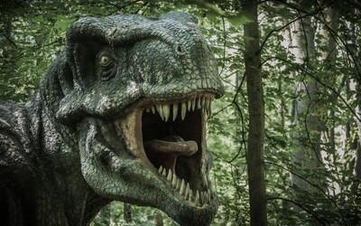 Tyranosaurus rex měl v hlavě něco jako osobní klimatizaci, ukázal výzkum