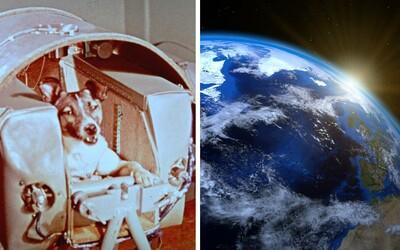 Ubehlo 60 rokov, čo vedci poslali do vesmíru Lajku. Čo sa však stalo s ďalšími zvieracími astronautmi?