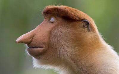Ukázali najlepšie fotky divokej prírody za rok 2020. Pozri si ich aj ty