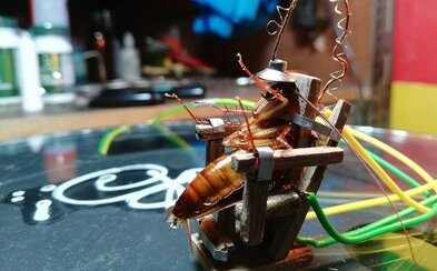 Umělec popravil švába na miniaturním elektrickém křesle. Lidé ho kritizují