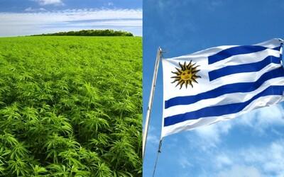 Uruguaj kompletne zlegalizuje marihuanu. Gram bude stáť sotva euro a pestovať ju môžeš aj doma