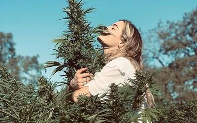USA udělaly historický krok k dekriminalizaci marihuany: Federální zákaz této drogy může skončit, místo toho chtějí vybírat daň