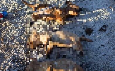 Utopili štěňata v žumpě a dostali dvouletou podmínku, lidé trest kritizují