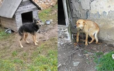 Už 40-tisíc Slovákov podpísalo petíciu proti držaniu psov na reťazi