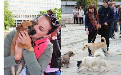 Už v sobotu sa v Bratislave zaľúbiš... do psíkov a mačiek z útulkov. Nezvyčajná zoznamka spája ľudí s chlpáčmi, ktorým treba domov