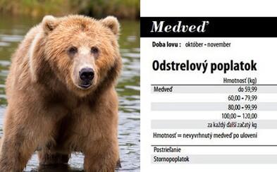 Už za 2000 eur si v našej prírode môžeš pokojne zastreliť medveďa. Slovenskí poľovníci majú z regulácie ich počtu dobrý biznis
