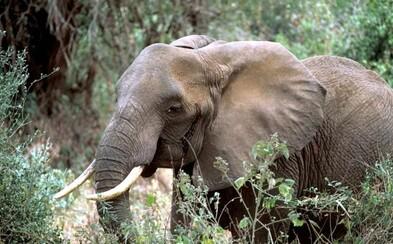 V africkém národním parku za celý rok neupytlačili ani jednoho slona