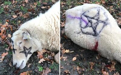 V Anglicku na telá dobodaných oviec nasprejovali pentagram, kostol označili číslom 666