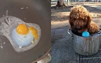 V Austrálii je také teplo, že si ľudia smažia vajíčka na slnku a psíkov ochladzujú v hrncoch. Teploty prekonávajú 79-ročné rekordy