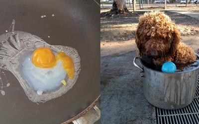 V Austrálii je takové teplo, že se psi zchlazují v hrncích a lidé smaží vajíčka na slunci. Teploty překonávají 79leté rekordy